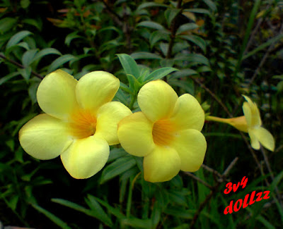 Gorgeous Yellow Flower Pictures. Bunga berwarna kuning.