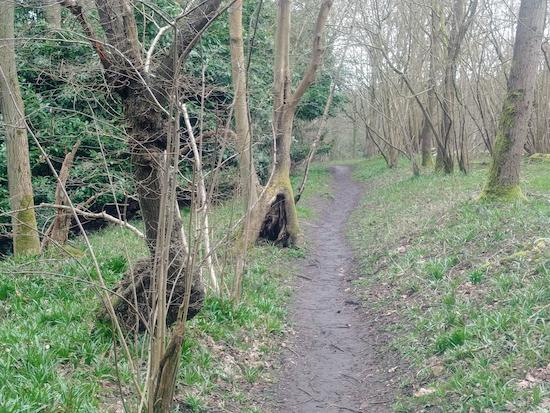 Jack William's Wood