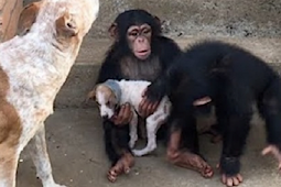 Dying Puppy Rescued From Roadside Makes Amazing Recovery At Chimp Sanctuary