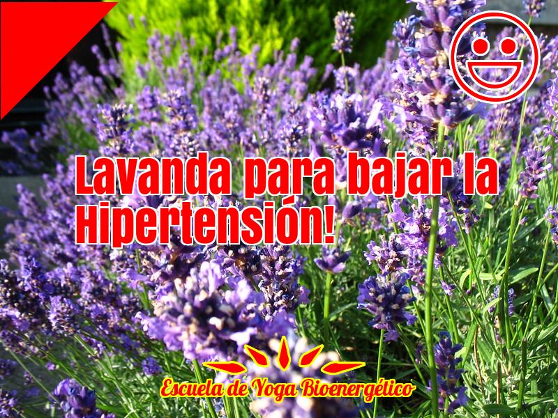 Hipertensión diastólica causas
