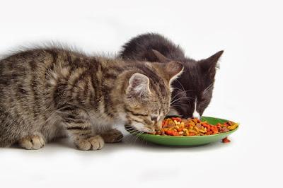makanan kucing bernutrisi tinggi