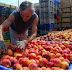 Γιάννης Σηφάκης : Οι φορείς των αγροτών ( ΣΕΑΣ, Αγροτικοί σύλλογοι) να διεκδικήσουν 35 λεπτά το κιλό για το καλό συμπύρηνο ροδάκινο