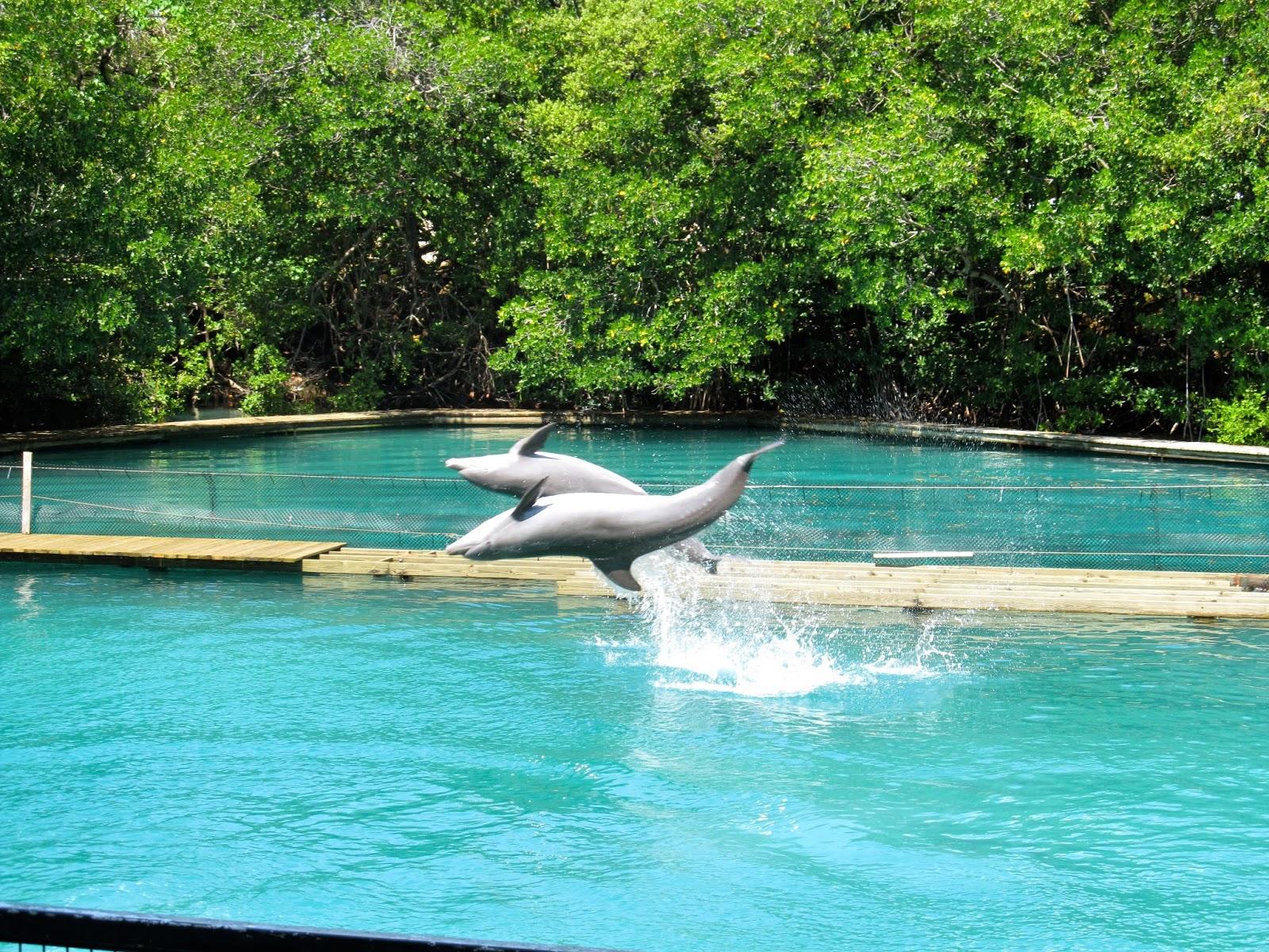 Dolphin Show Miami Seaquarium, FL - ouroutdoortravels.blogspot.com