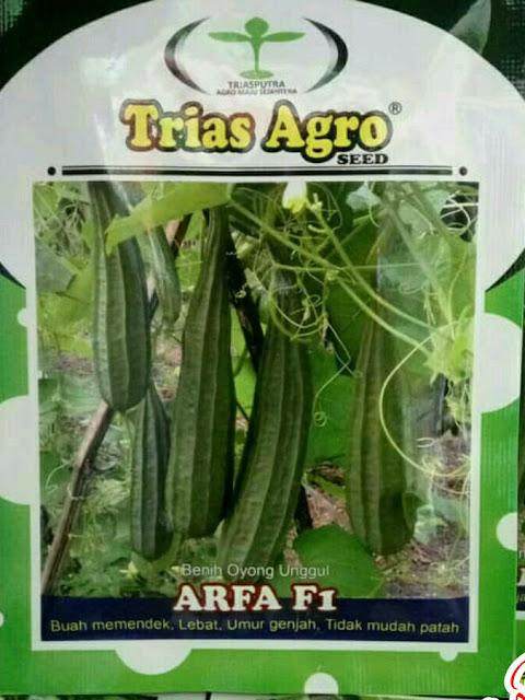 Benih Oyong Unggul ARFA F1 Produk Trias Agro Seed