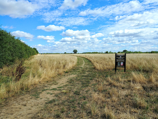 One of the unpaved tracks in Heartwood Forest