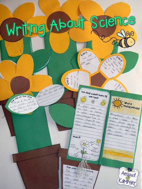 Plant life cycle foldable flower booklet~part of a complete unit.