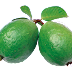 WHY GUAVA IS IMPORTANT?