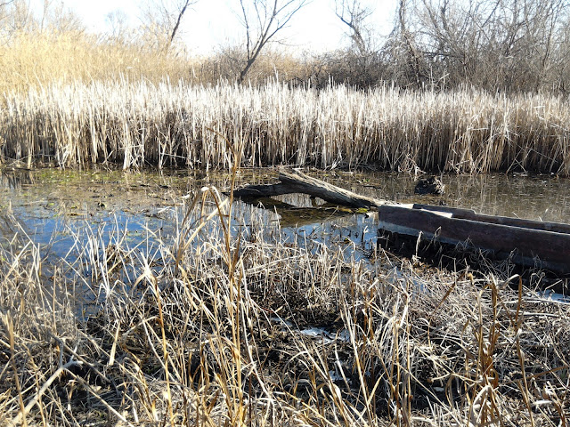 #brod #swamp #močvara
