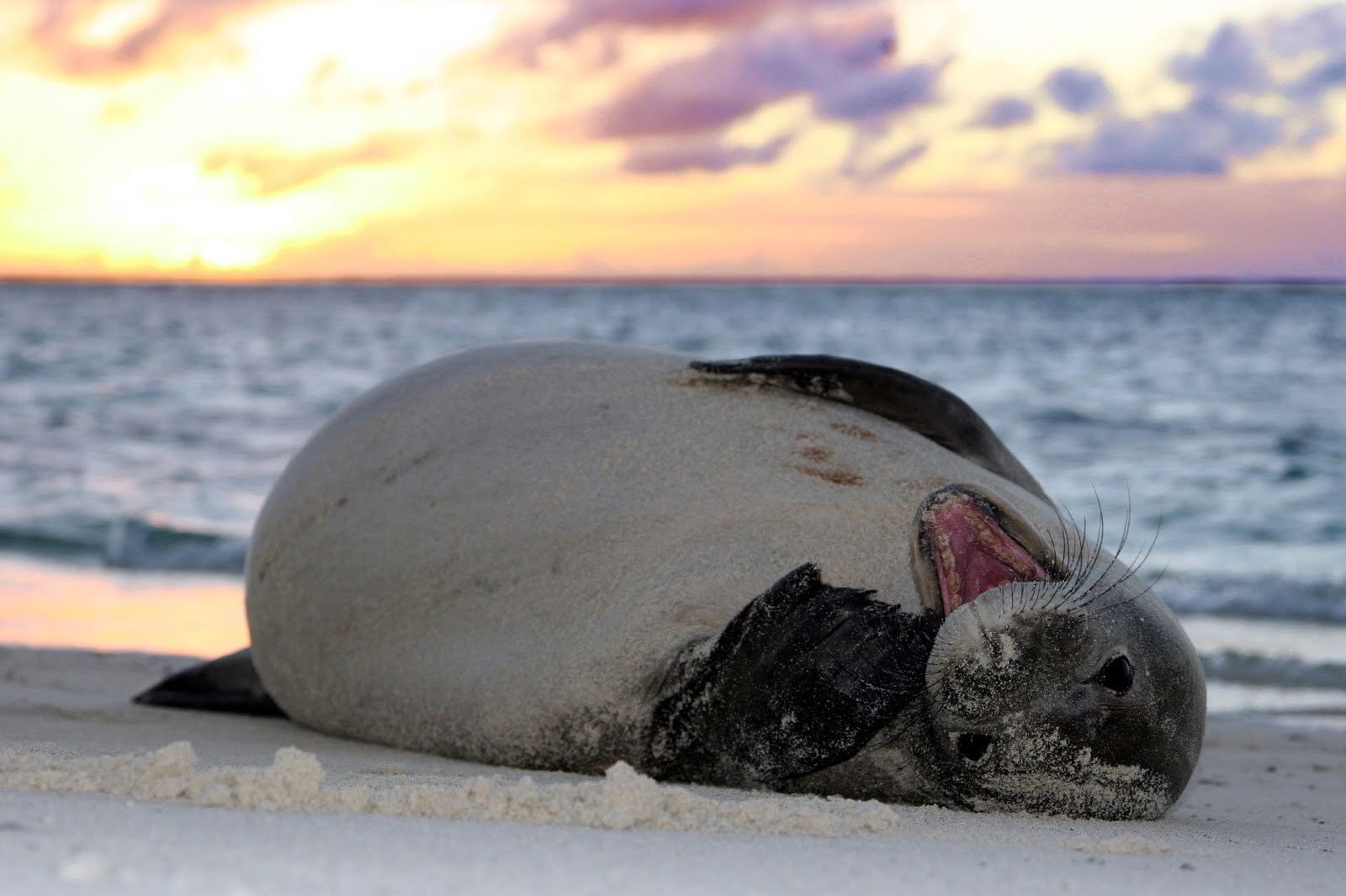 Resultado de imagen para 300 focas muertas ALASKA