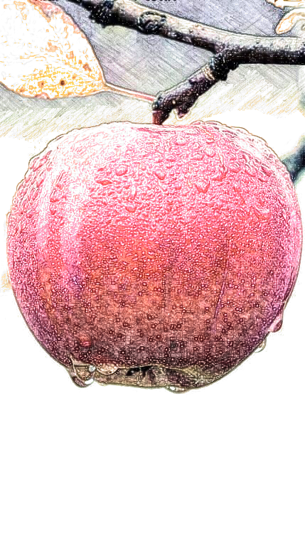 Maçã | Apple