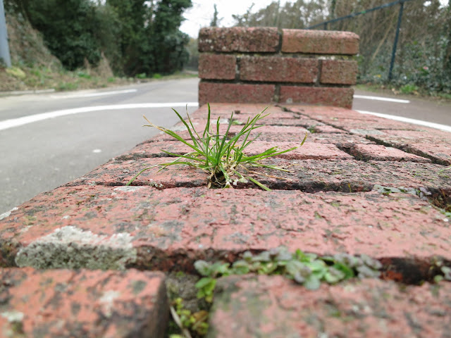 Single plant of grass grows from the wall beside the underpass path.