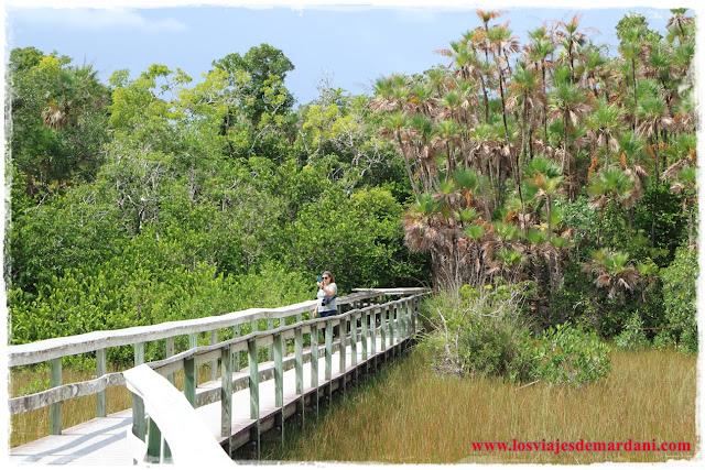 Ruta por los senderos en los Everglades