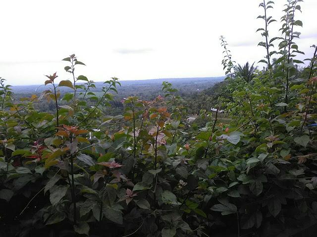 Review Lembah Gunung Madu Simo Boyolali