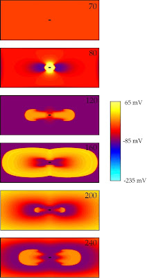 """A figure based on Fig. 1 in """"An S1 Gradient of Refractoriness is Not Essential for Reentry Induction by an S2 Stimulus"""" (IEEE Trans. Biomed. Eng., Volume 47, Pages 820–821, 2000). It is the same as the figure in the communication, except the color and quality are improved."""