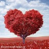 Download Love Dp For Whatsapp