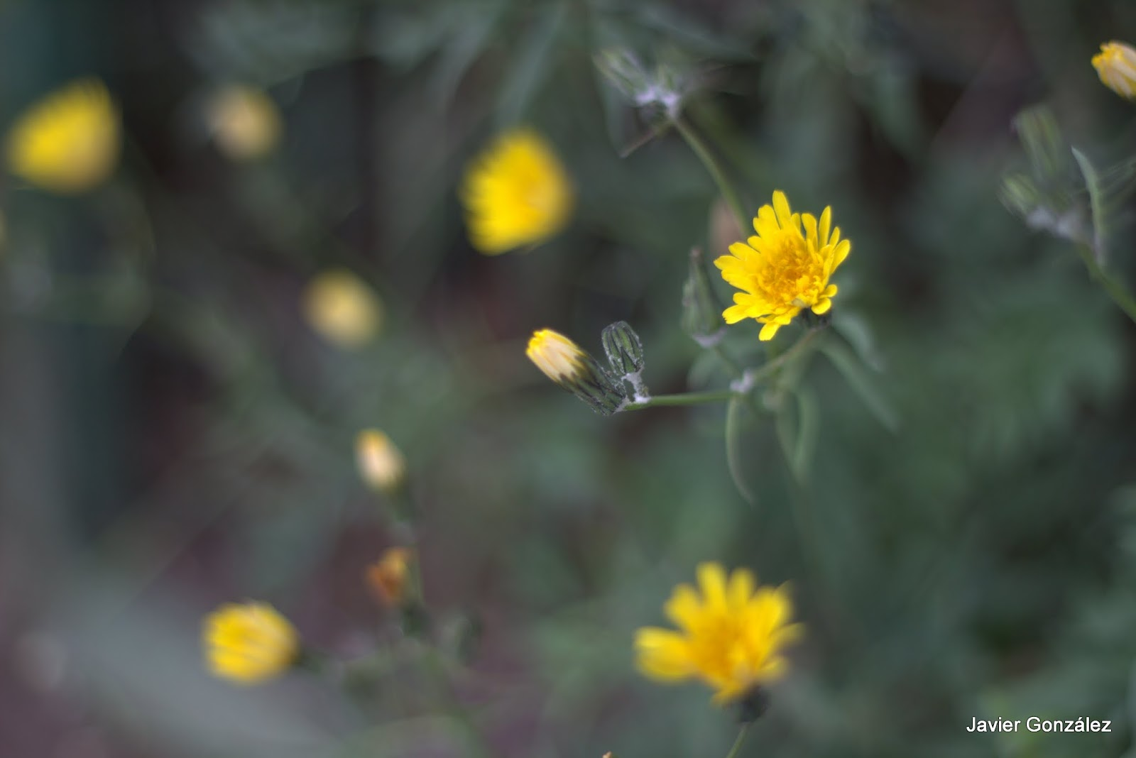 Flor. Primavera.