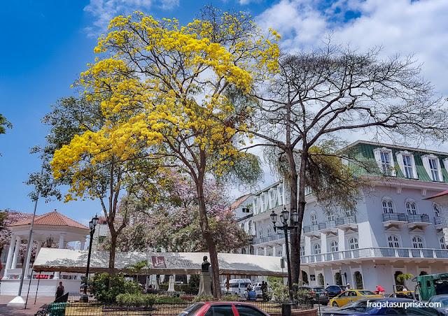 Ipês floridos no Centro Histórico da Cidade do Panamá