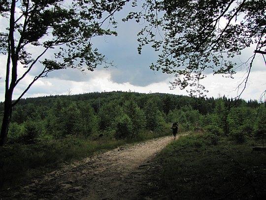 W drodze na Runek.