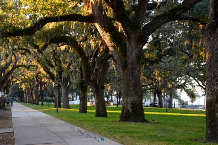 Live Oak Trees:  #10 of 12 Things To Do in 24 Hours in Savannah, GA | Ms. Toody Goo Shoes
