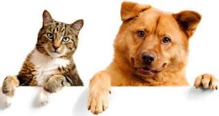 Lebih Baik Mana, Pelihara Anjing atau Kucing?
