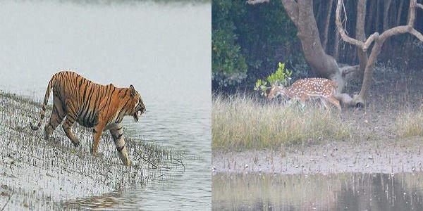 Cheap Sundarbans Tour Package
