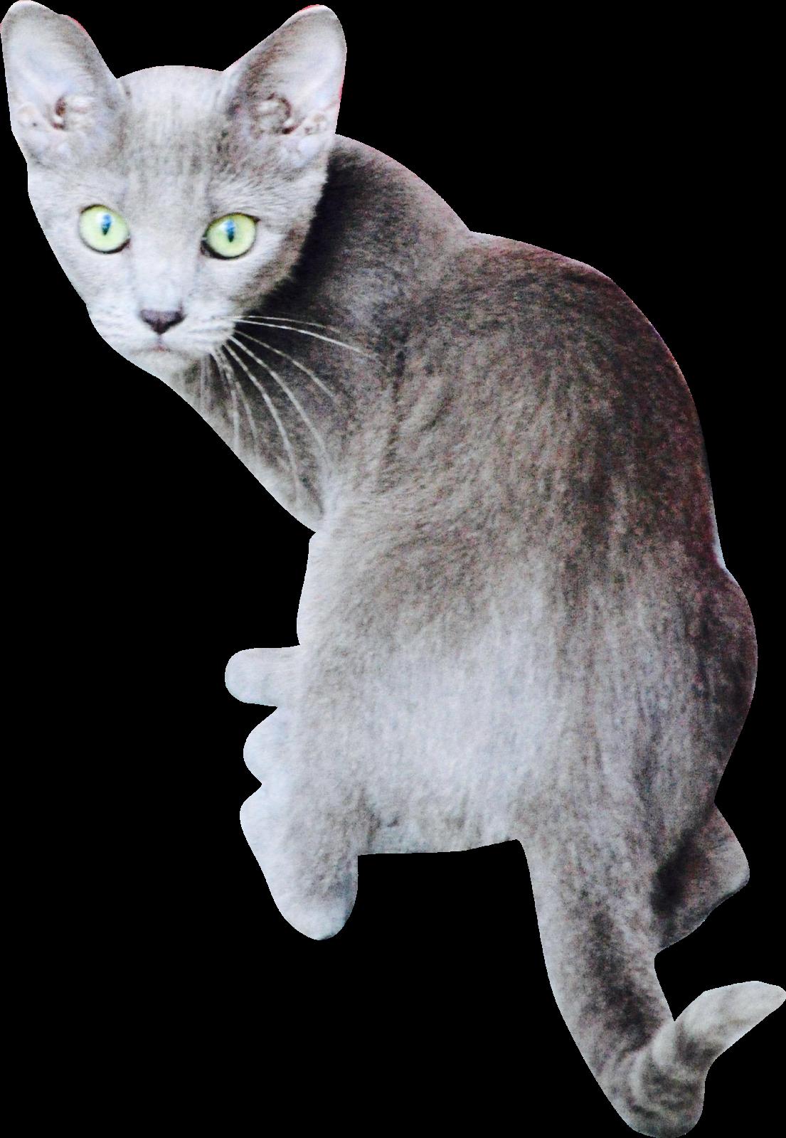 Kitten freebies / Coupon plymouth mn