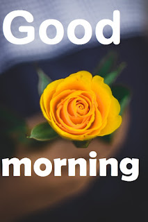 yellow-flowers-good morning