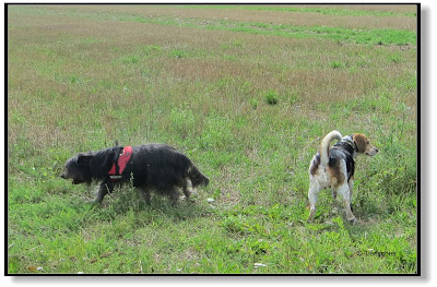 ein Blog über Emma und Lotte, Hundeblog, Dogblog, zwei Hunde unterwegs,