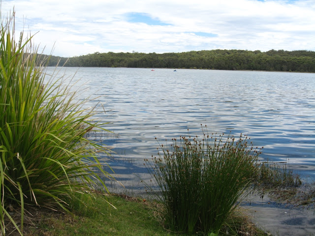 View of Lake Conjola. In the foreground are some rushes along the grassy bank. The far shore is covered with bush right up to the water's edge. The blue sky is dotted with white clouds and reflected in the water. Two kayakers appear as red and blue dots on the surface of the lake in the middle distance.