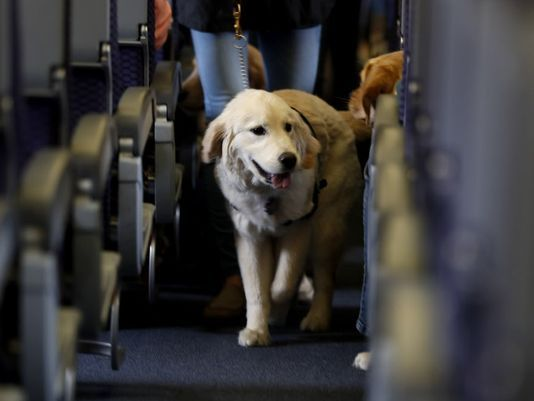 Following peacock fiasco, United Airlines tightens policy for comfort animals