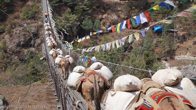 Senda, puente, sendero, trekking, everst, parque, Sagarmatha, valle, precios