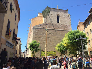 festa l'arbre de maig tradició catalana