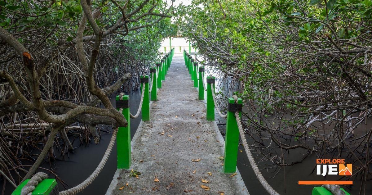 hutan mangrove di pantai Bama Baluran