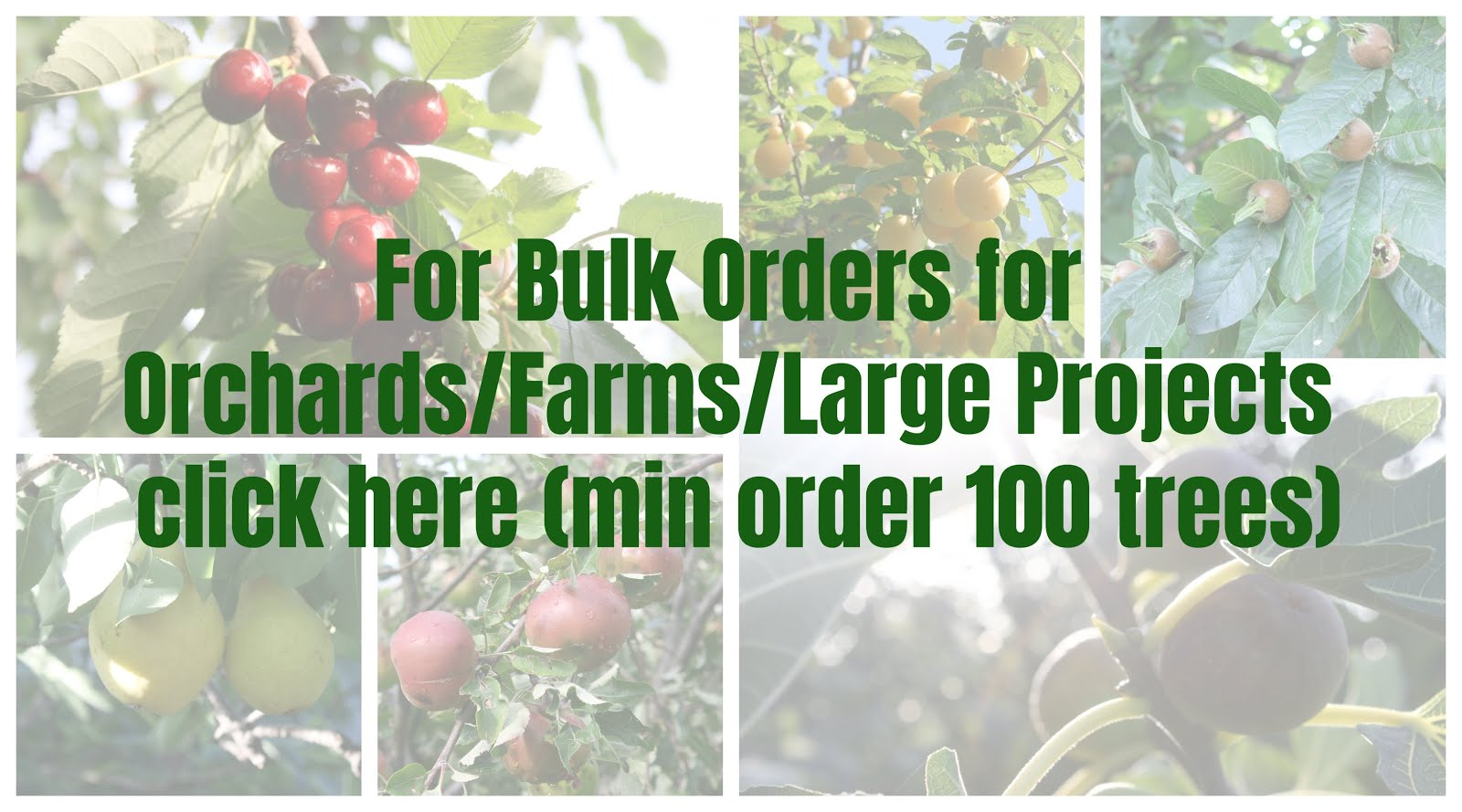 Bulk Fruit Tree Orders
