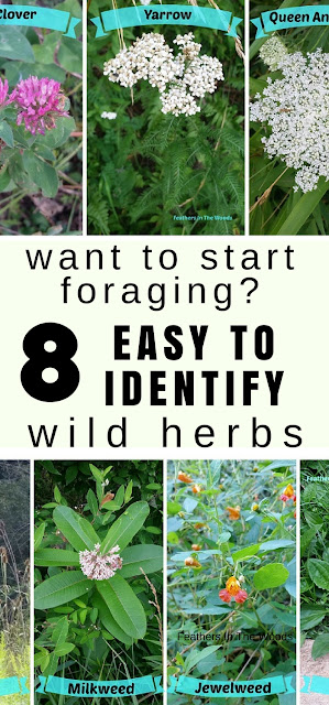 Beginners guide to foraging for herbs