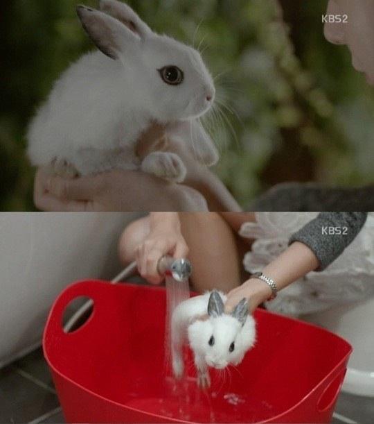 grooming atau memandikan kelinci hias