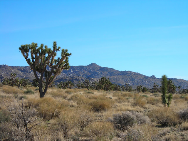 Mojave National Preserve ca 2006