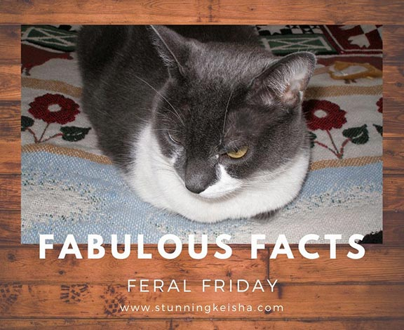 Fabulous Facts for Feral Friday