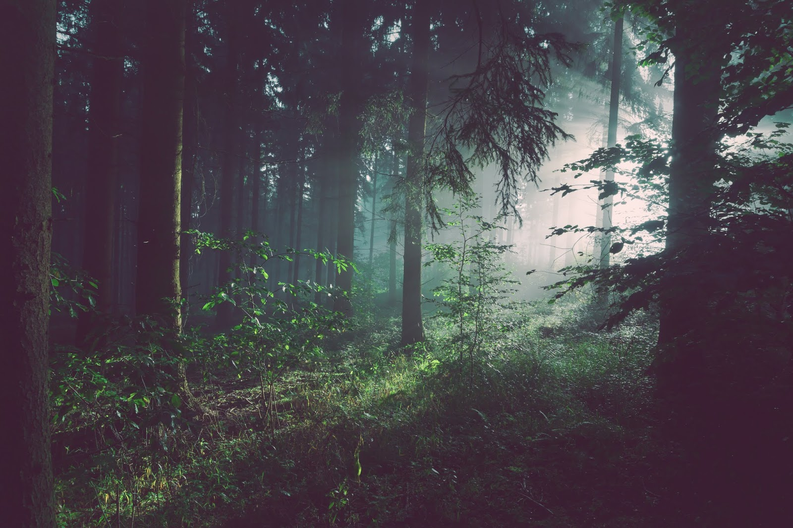 Atmospheric photo taken in a forest, with the sun light streaming through from the right