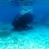 Η νήσος Πρώτη  στο Ιόνιο  με το ιστορικό ναυάγιο Anouar![βίντεο]