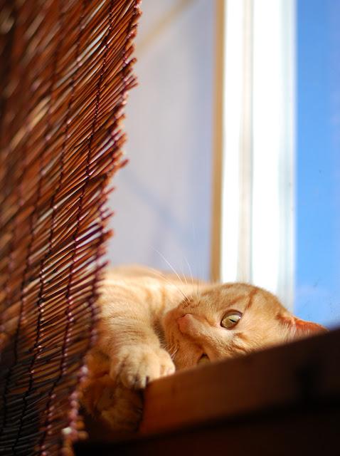 猫のじゅんこ