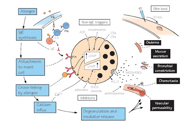 Allergy And Anaphylaxis