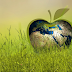 Curso Sustentabilidade e Meio Ambiente