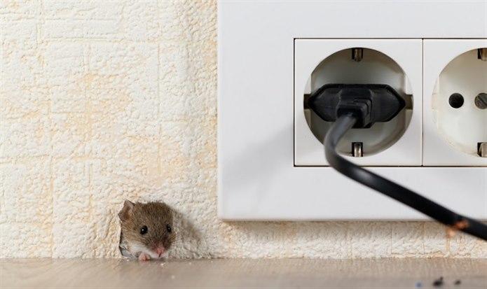 Evde fare var mı?