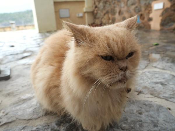 cat in bad shape