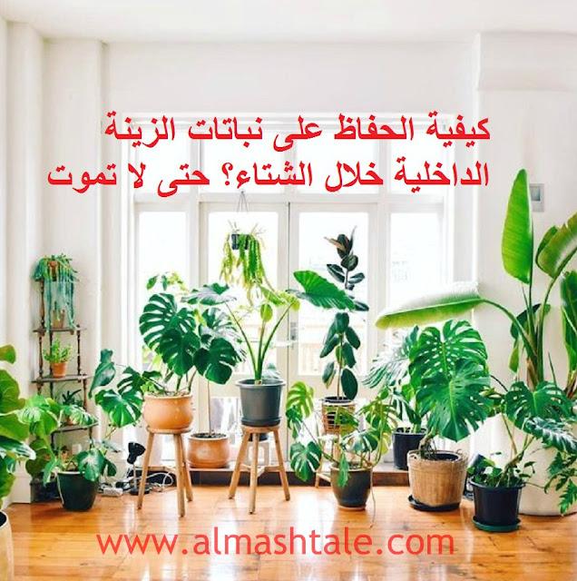 كيفية الحفاظ على نباتات الزينة interior garden الداخلية؟