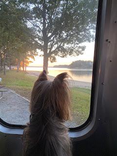 Suzy looking at the lake