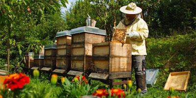 Οδηγός ασφάλειας και υγείας κατά την άσκηση μελισσοκομικών εργασιών