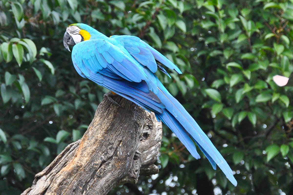 Parrot, Parco Faunistico Cappeller, Nove, Veneto, Italy