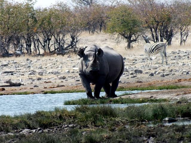 Rinoceronte en Etosha